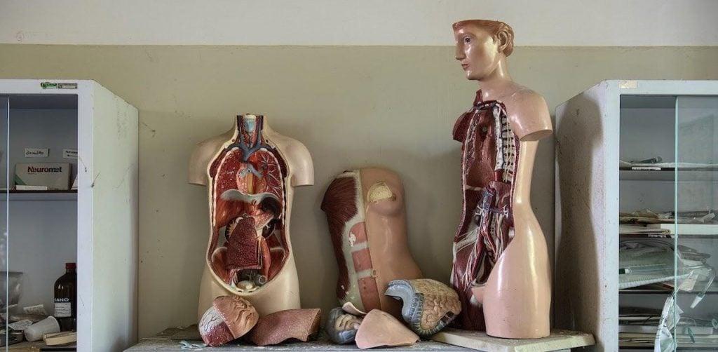 funzioni del fegato