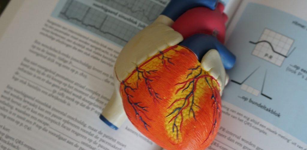 il cuore riassunto