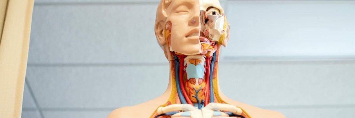 biologia argomenti medicina