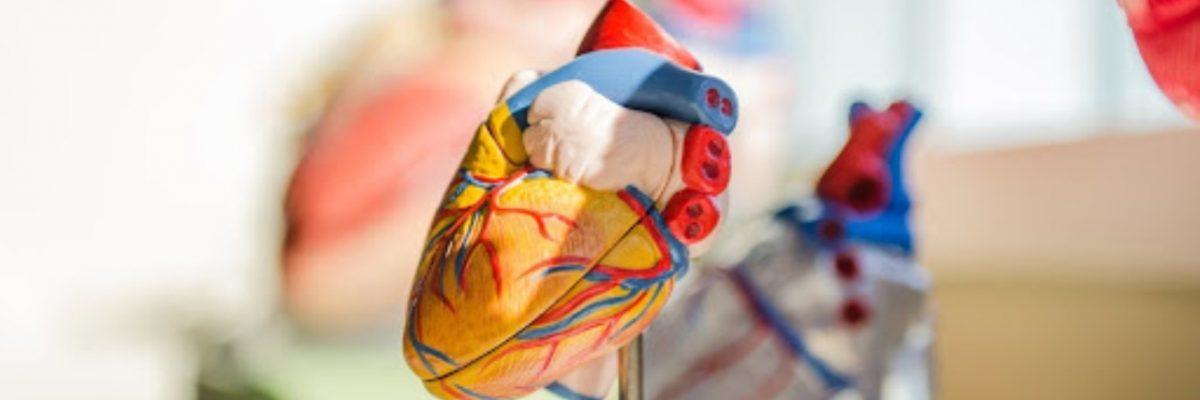 quiz anatomia