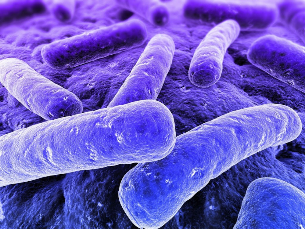 batteri studiare medicina